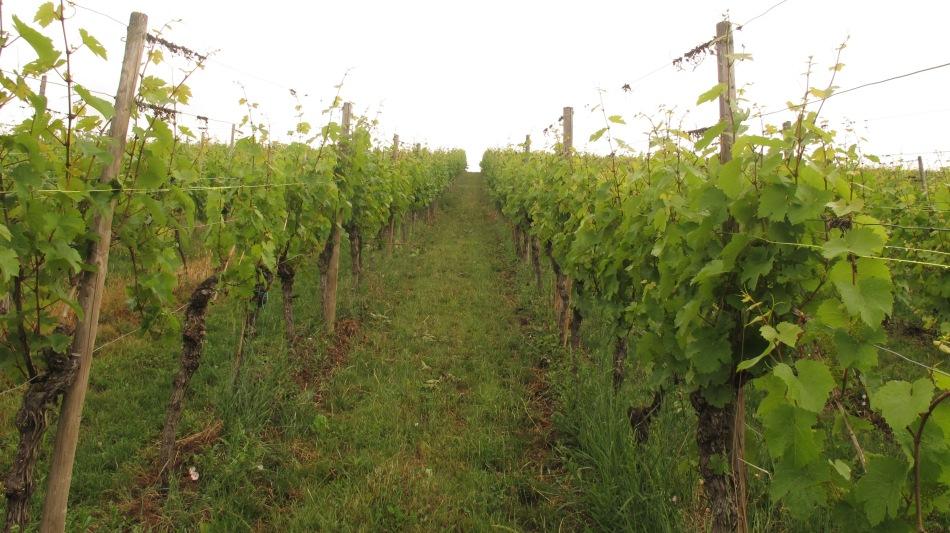 Domaines Vinsmoselle